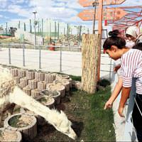 Kayseri Hayvanat Bah�esi a��ld�