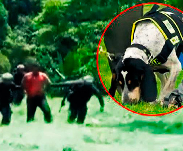Mafya köpeği 'polis' oldu