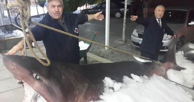İstanbul'da 1 tonluk köpek balığı yakalandı