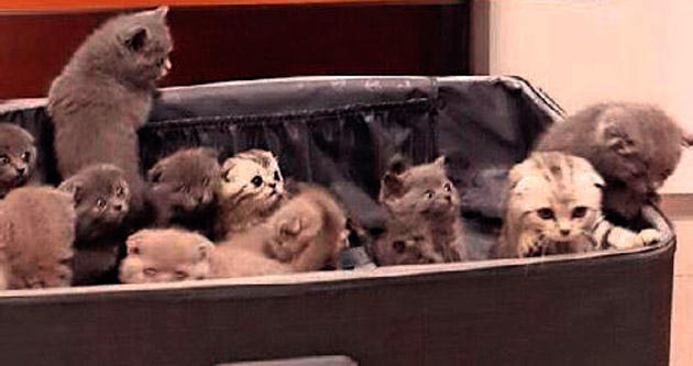 Bavullarından 23 kedi çıktı