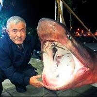 Dev köpekbalığı kanser hastalarına umut oldu