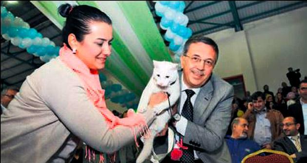 En Güzel Ankara Kedisi belirleniyor