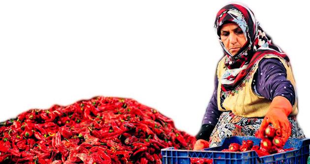 Kadınlardan 1 milyon TL'lik ihracat