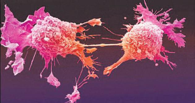 Kanserli hücreyi yok eden virüs