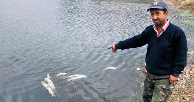 Kızılırmak'ta balıklar ölüyor