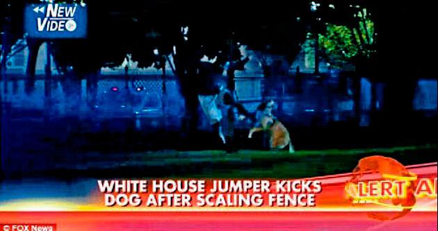 Beyaz Saray'a girdi köpekler durdurdu