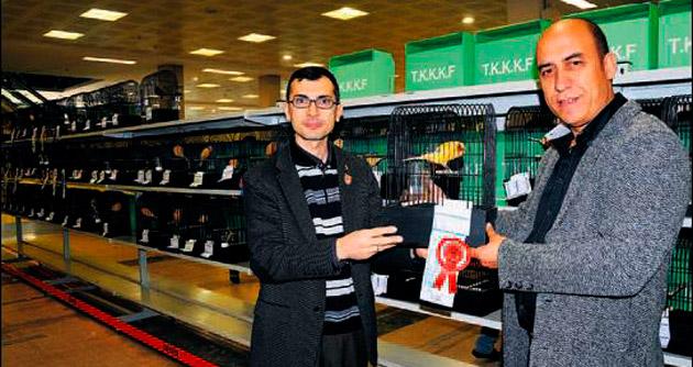 En güzel kanaryalar Ankara'da yarıştı