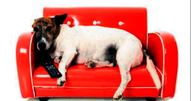 Köpeklere özel TV kanalı Avrupa'da