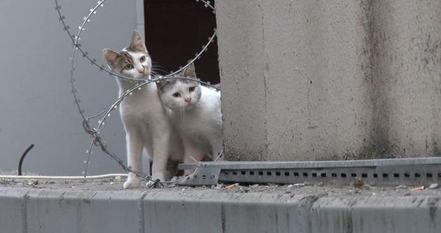 Metrobüs durağında kedi operasyonu