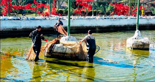 250 bin balık göle salınacak