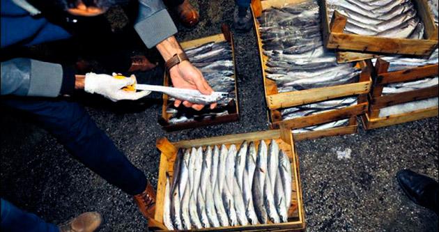 20 işletmeye küçük balık cezası kesildi