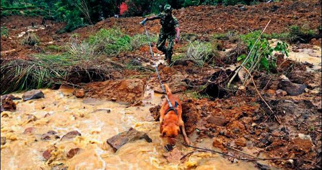 Kayıp 200 kişi için son çare köpekler
