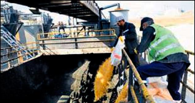 İki ton bozulmuş dane mısırı imha edildi