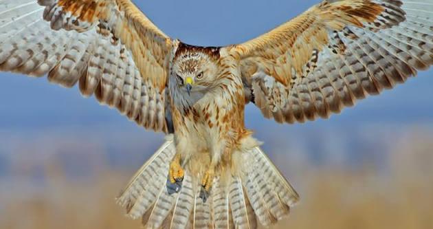 ODTÜ'nün kuşları kitap oldu