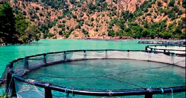 Balık yetiştiriciliği için kurs açılıyor