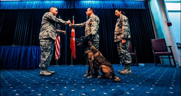 K-9 köpeği 'Kira' törenle emekli oldu