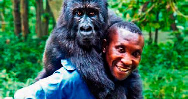Gorillerle çocuğuymuş gibi ilgileniyor