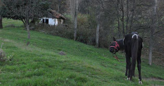 Uludağ'da 'dörtnala' eko turizm