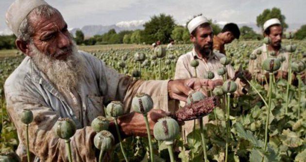 Afganistan'da uyuşturucu artışı