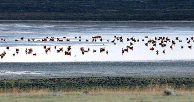 Kuyucuk Kuş Cenneti taşıma suyla kurtarılacak