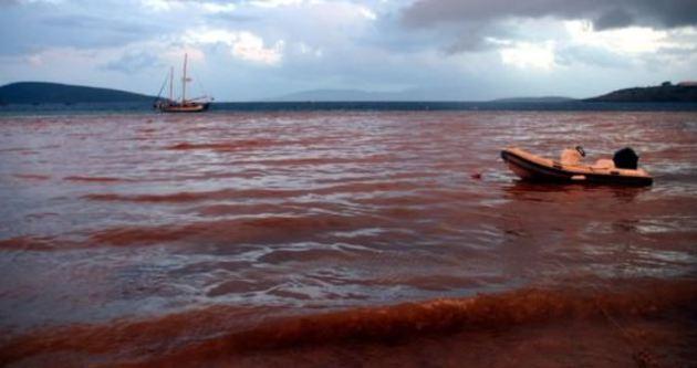 Bodrum'da denizin rengi şoke etti!