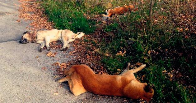 Alacaatlı'daki köpek katliamına tepki