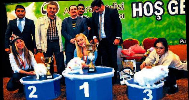 En güzel Ankara kedisi 'Romeo'