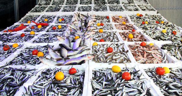 Marmara'da balık bolluğu, yüzleri güldürüyor