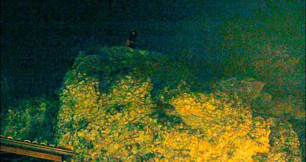 Kayalığın tepesinde 4 saatlik korku