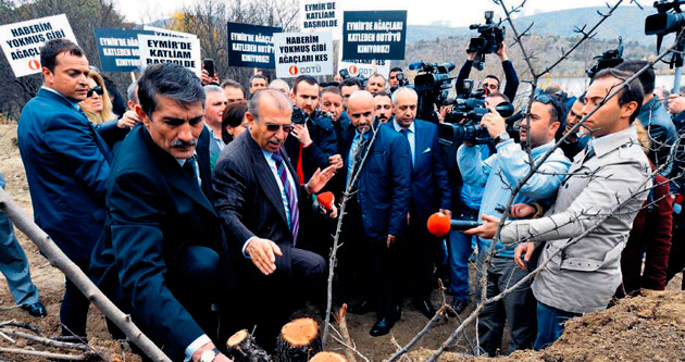 ODTÜ'de ağaç katliamı