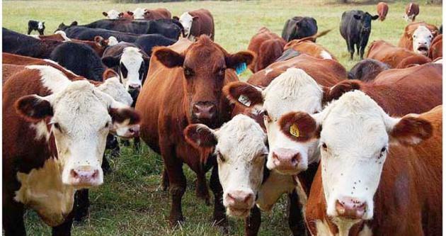 Canlı hayvan ihracatında 5 yılın rekoru kırıldı