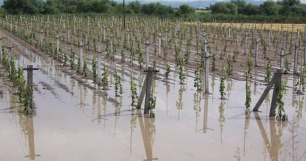 Afetzede çiftçilere tazminat müjdesi