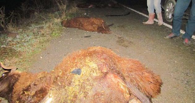 Otomobil sürüye daldı 28 koyun telef oldu
