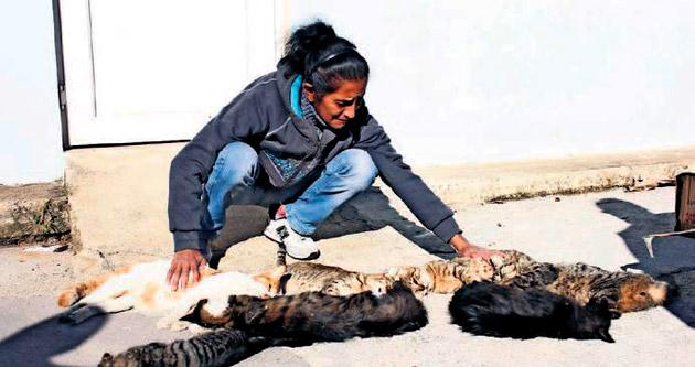 Hayatını adadığı sokak kedilerine kıydılar