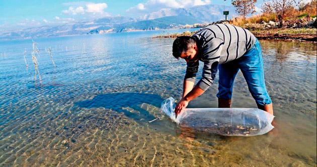 Bilinçsiz balıklandırma, yerli balığı yok ediyor