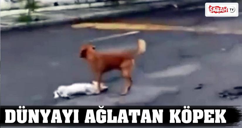 Dünyayı ağlatan köpek