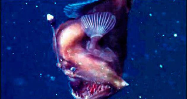 Kaliforniya'da siyah deniz şeytan bulundu
