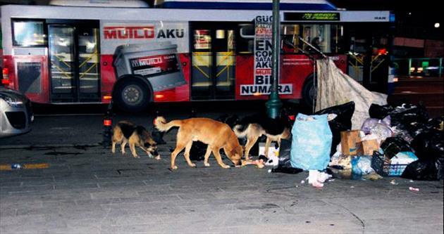 Sokak köpekleri vatandaşı bıktırdı