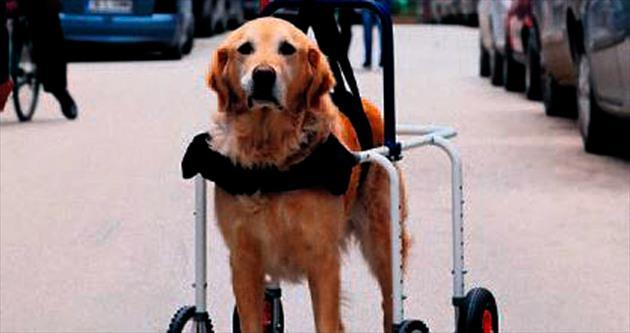 Martıya protez, köpeğe yürüteç