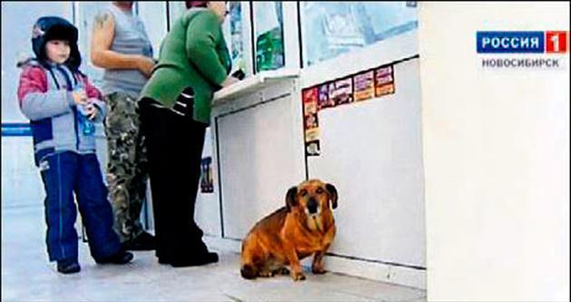 Sahibini unutmayan vefalı köpek