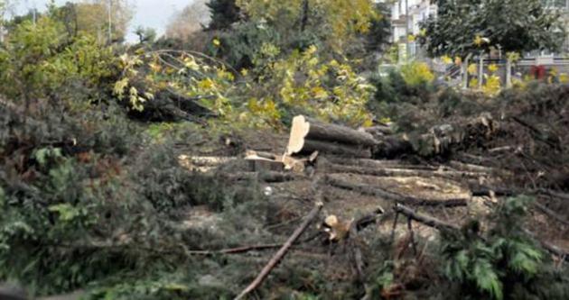 İki yüzlü medya ağaç katliamını savundu