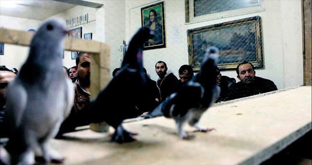 Güvercin meraklıları mezatta buluşuyor