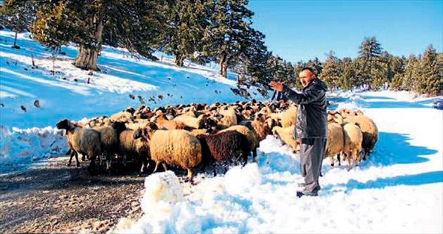 Mersin'de kar savaşı