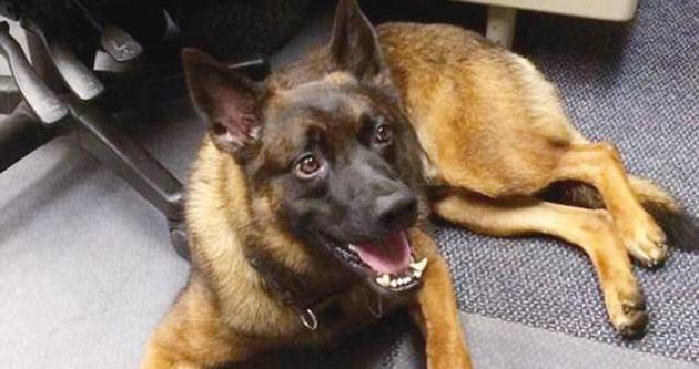 ABD'nin polis köpeği kovuldu!