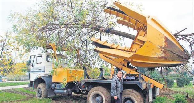 İki bin ağaç işte böyle taşınacak