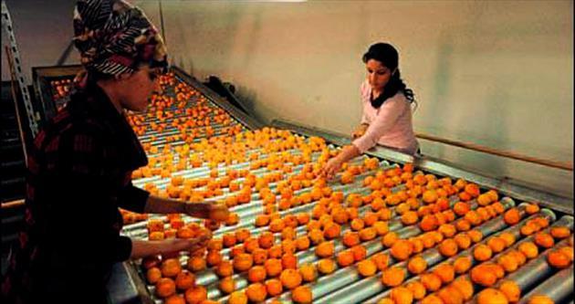 Avrupa Birliği'ne mandalina ihracı