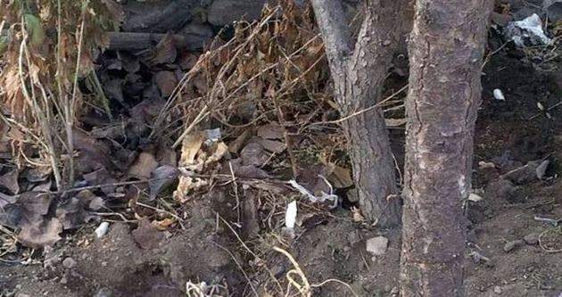 Yeni doğan bebeği öldü diye gömdüler ama...