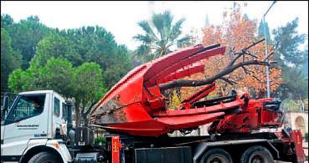 İnşaata engel olan ağacı söküp taşıdılar