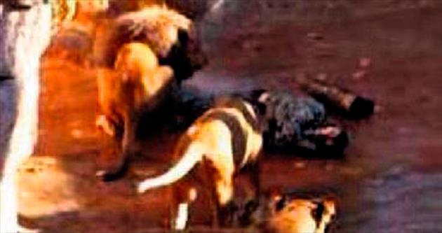 Aslanları kızdırdı saldırıya uğradı