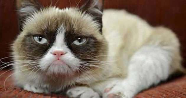 Huysuz kedi sahibini zengin etti